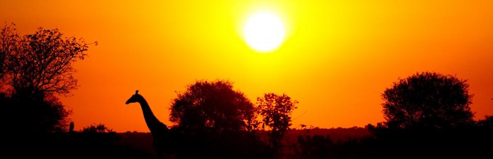 Under an African Sun