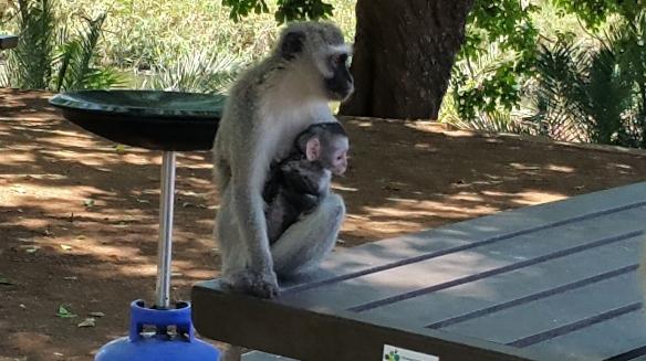 Kruger Babies